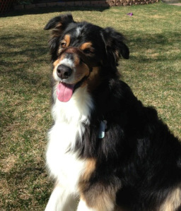 Managing Exuberance in a Therapy Dog